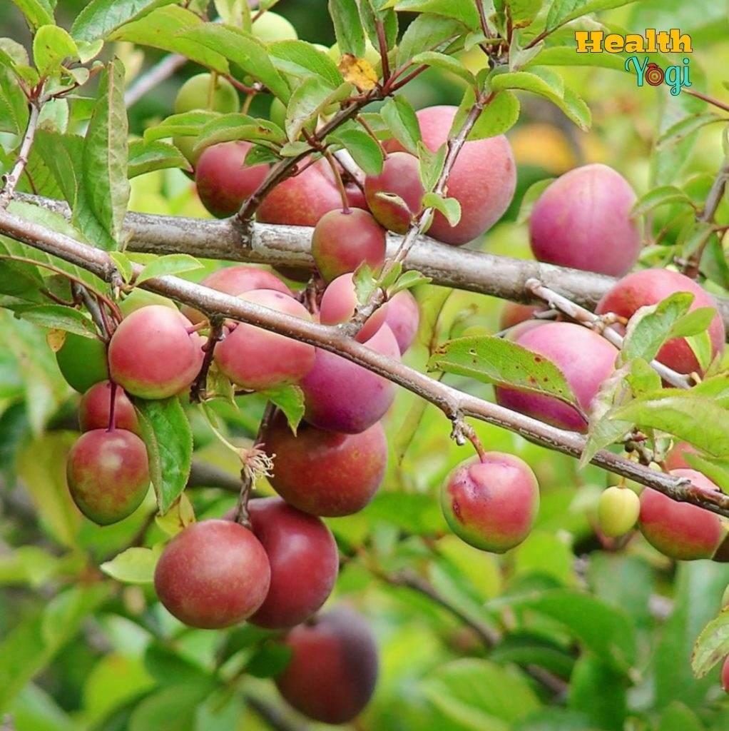 Plum Fruit Benefits For Skin